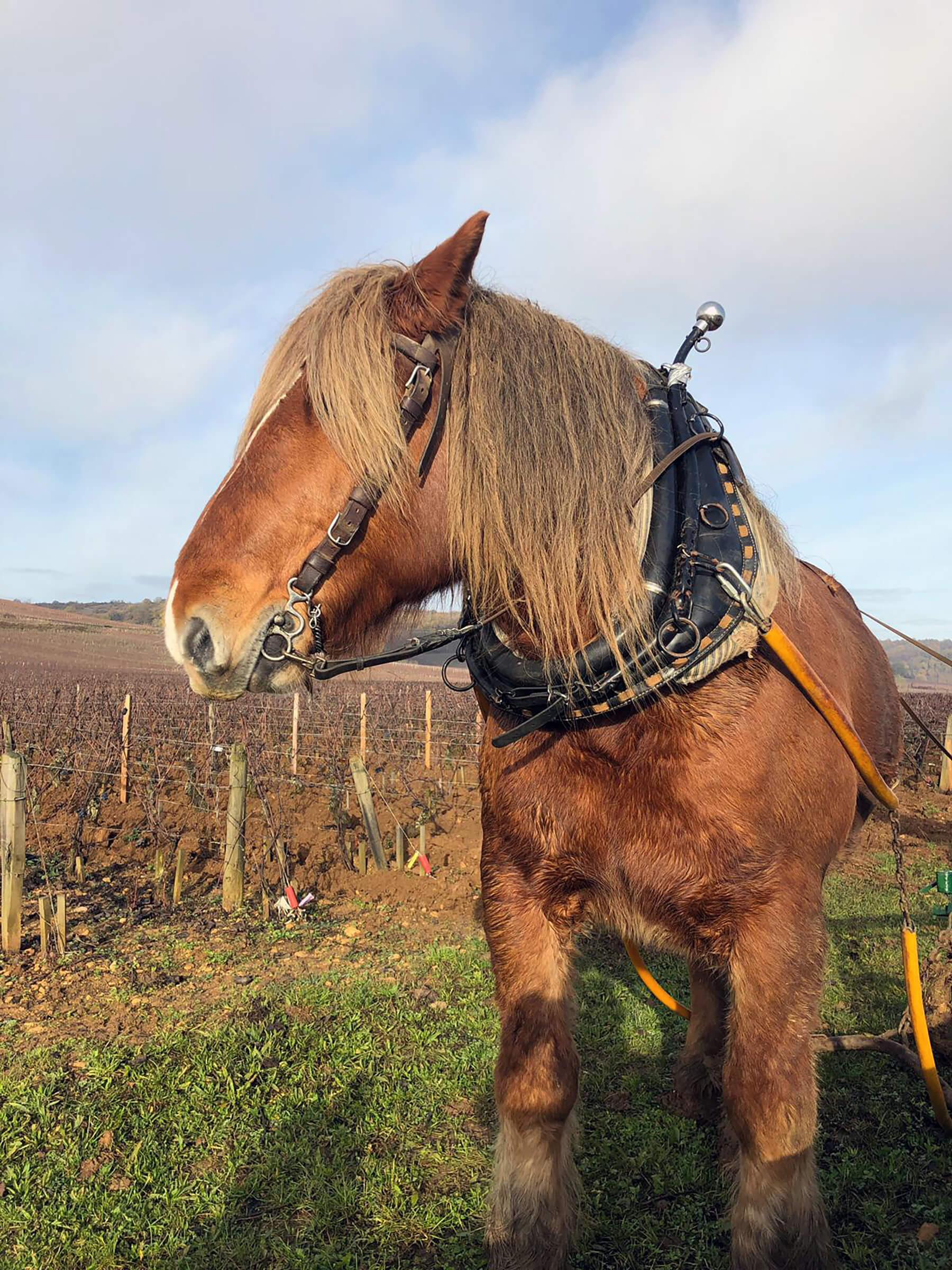bourgogne-discovery-transport-prive-de-personne-visite-vigne-grand-domaine-viticole-bourgogne-france-franche-comte